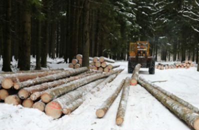 Stacked logs in the forestry industry where all heavy trucks and loaders are have their lubrication points greased with automatic electro-lubers