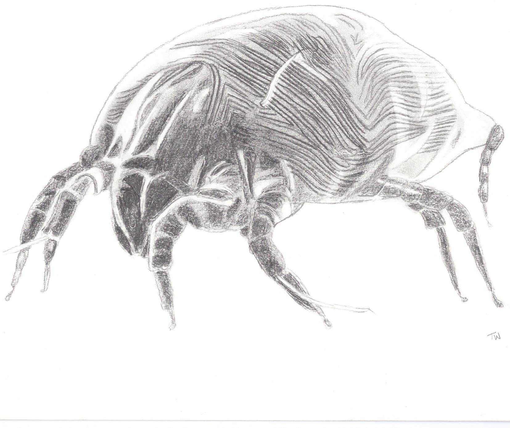 Artists impression of a dust mite