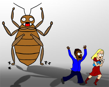 panicked or confused about bed bugs  learn more about them