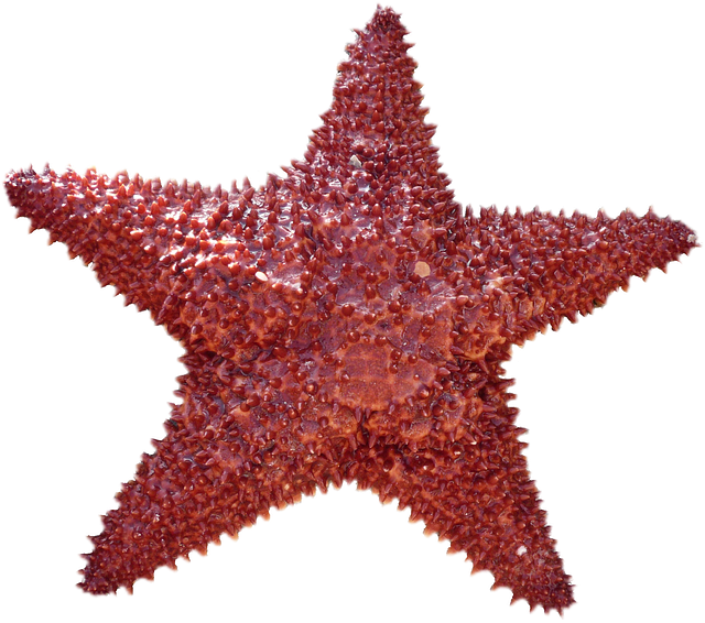 small red sea star accenting bottom link to About page