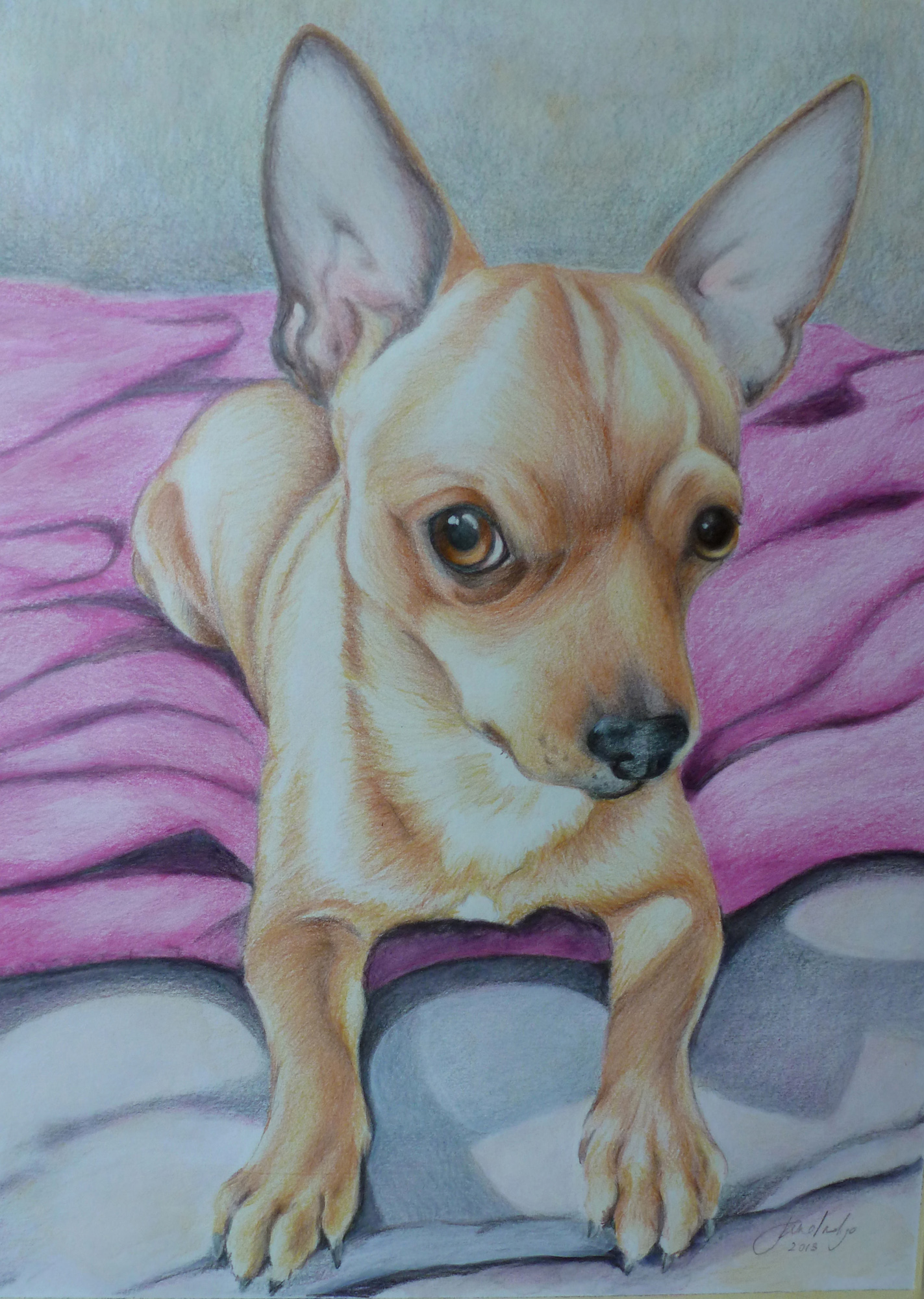 An portrait in coloured pencils of a Chihuahua dog by Jane Indigo Moore