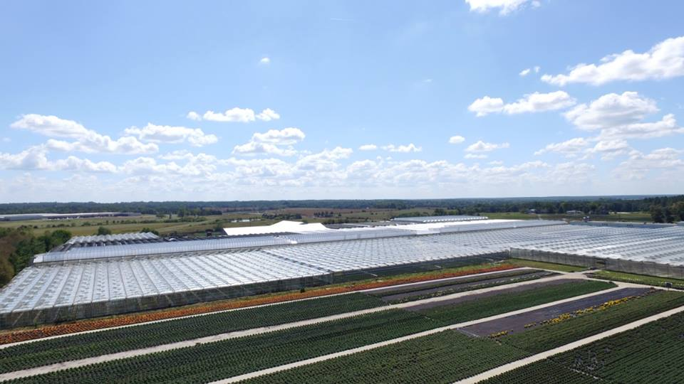 Overhead view of greenhouses
