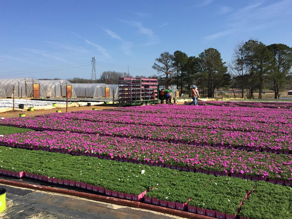 Working to load plants ready to ship to the stores.