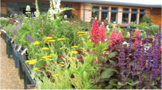 seasonal plants at Sturmer Nurseries